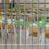 CAIVANO: Ultimi risvolti sul servizio mensa nelle scuole
